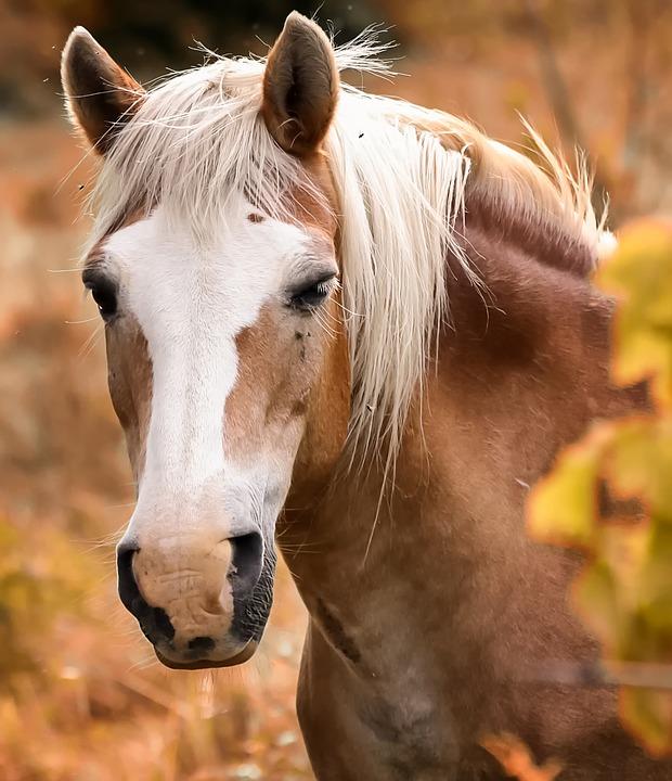 pferde news